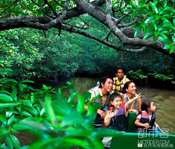 民丹岛红树林探险