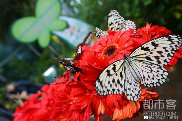 樟宜机场蝴蝶园